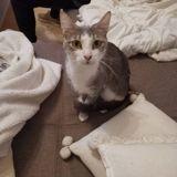 Yuhi, Chat à adopter