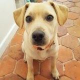 Mapu, Chiot à adopter