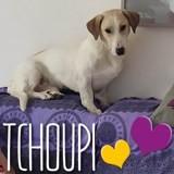 Tchoupi, Chien à adopter