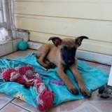 Bonny, Chiot à adopter