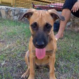 Fiona, Chiot à adopter
