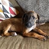 Twiggy, Chiot à adopter