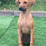 Rio, Chiot à adopter