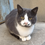 Cesar, Chat à adopter