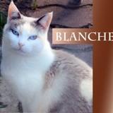 Blanche une beauté, Chat à adopter