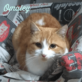 Omaley, Chat à adopter