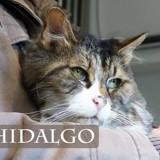 (sos) hidalgo les beaux yeux, Chat à adopter