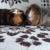 King et kong, Animal à adopter