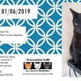 Jimmy, Chat à adopter