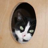 Maima, Chat à adopter