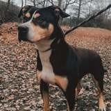 Doug, Chien à adopter