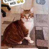 Adoption Chat Alpes Maritimes