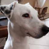 Milo, Chien à adopter