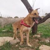 Otto (refugiados), Chien à adopter