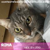 Rina, Chat à adopter