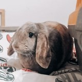 Sakura, Animal à adopter