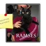 Ramses chat à bras, Chat à adopter