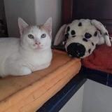 Bubba, Chaton à adopter