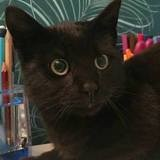 Chester, Chat à adopter