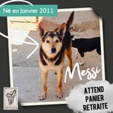 Messi, Chien à adopter