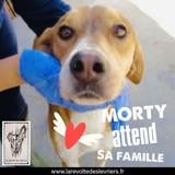 Morty, Chien à adopter