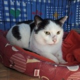 Victor, Chat à adopter