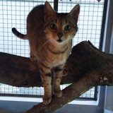Cherie, Chat à adopter