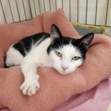 Capucine, Chat à adopter
