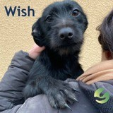 Wish, Chiot à adopter