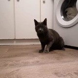 Hermes, Chat à adopter