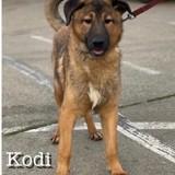 Kodi male a sauver de sotchi, Chiot à adopter