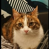 Lola chatte pour adoption, Chat à adopter