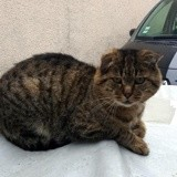 Gros mimi, Chat à adopter