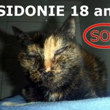Sos pour sidonie 18 ans aveugle, Chat à adopter