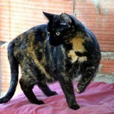 Breena, Chat à adopter