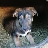 Skyy, Chiot à adopter
