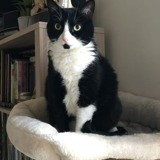 Noursse, Chat à adopter