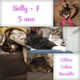 Sally, Chat à adopter