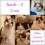 Sarah, Chat à adopter