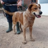 Archie (101 huellas), Chiot à adopter