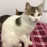 Lulu, Chiot à adopter