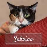 Sabrina, Chaton européen à adopter