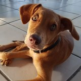 Ricky, Chiot à adopter