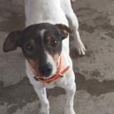 Axel, Chien à adopter
