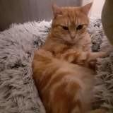 Maddy, Chat européen à adopter