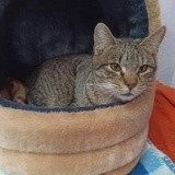 Sylvia, Chat à adopter