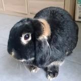 Raoul, Animal à adopter