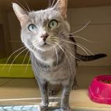 Bao, Chat à adopter