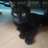 Specter, Chat à adopter