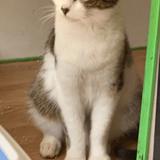 Pankha & titoune, Chaton à adopter
